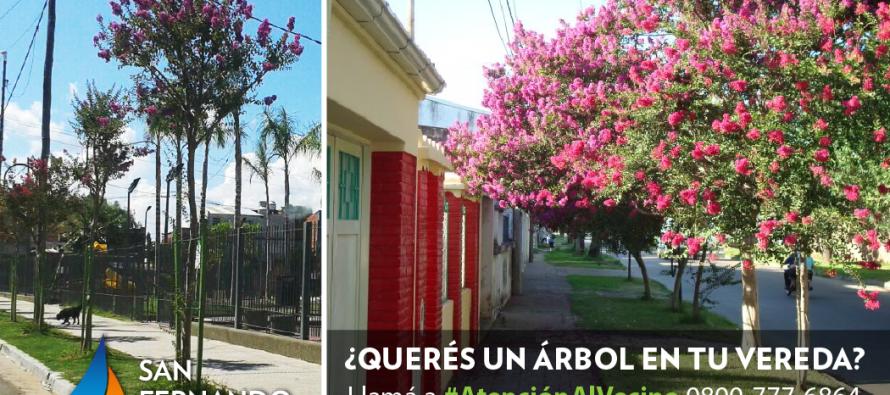 Los vecinos pueden solicitar la plantaci n de rboles en for Arboles de hojas perennes para veredas