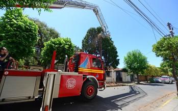 Intervención preventiva sobre árboles antiguos de nuestra ciudad