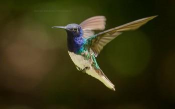El avistaje de aves, un imán en el Delta: encuentran nuevas especies