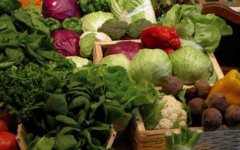 Capacitación y semillas gratis para hacer una huerta familiar