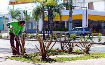 Se colocaron árboles y arbustos a lo largo de la Avenida Avellaneda
