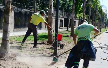 Nueva forestación en la obra de la calle Uruguay