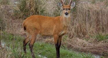 ¿Por qué es importante el Parque Nacional Ciervo de los Pantanos?