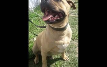Orión, el perro que después de dos años de haber ingresado a Zoonosis por orden judicial fue disciplinado y dado en adopción