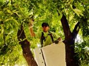 Trabajos de despeje de luminarias y cámaras de seguridad en Arenales entre Mansilla y Libertador