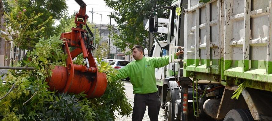 Trabajos de despeje de luminarias y cámaras de seguridad en nuestra ciudad
