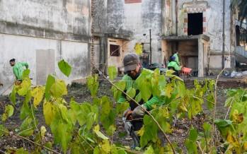 Operativo de limpieza, poda y refuerzo de la seguridad del Palacio Otamendi