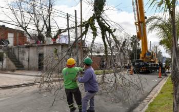 Extraen dos árboles con peligro de derribo en el barrio Santa Rosa