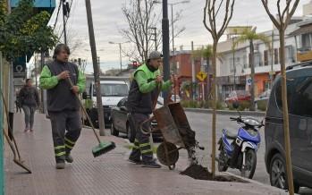 Avanza el plan de forestación en la avenida Avellaneda