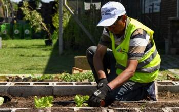 Huerta orgánica en la Secretaría de Servicios y Espacios Públicos de nuestra ciudad