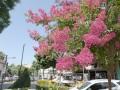 Se plantarán 10 mil árboles nuevos durante este año en nuestra ciudad