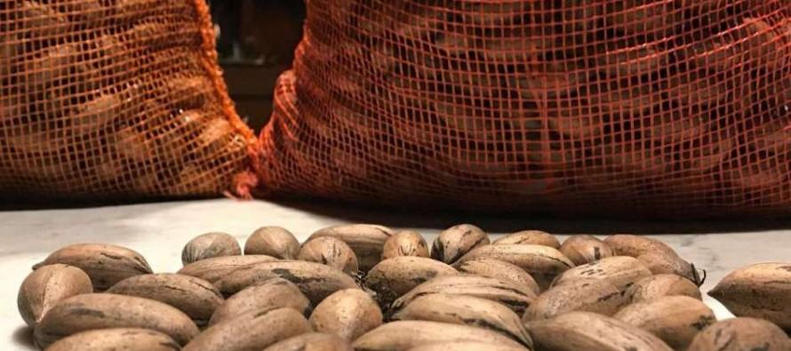 Delta: Argentina realizó la primera exportación de nuez pecán por vía aérea