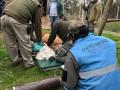 Un ciervo de los pantanos fue reinsertado en su hábitat tras tres meses de recuperación
