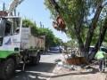 Operativo de limpieza en el barrio San Lorenzo