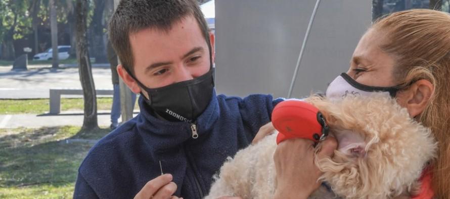 El operativo de zoonosis visitará mañana el barrio San Martin