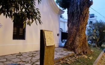 Lanusse y Martín Fierro: un rincón de nuestra ciudad con semillas traídas por Sarmiento