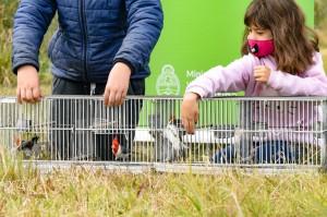 Liberación de aves rescatadas por la BCA (1)
