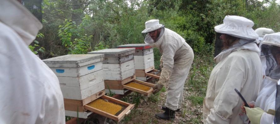 Jornada apícola en el Centro de Formación Profesional 402 de Paraná Miní